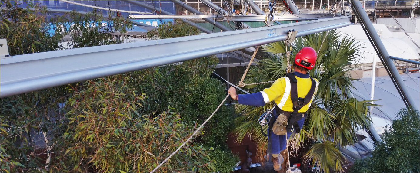 Worker Attached To Altrac Fall Arrest System Above Trees